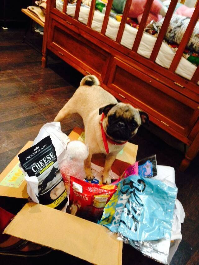 """I WON'T SHARE MY WAGBOX WITH ANYONE"" http://www.headsupfortails.com/wagbox/ #dogs #pets #pugs #wagbox #dogproducts #customisedproducts #shoponline #headsupfortails #huft"