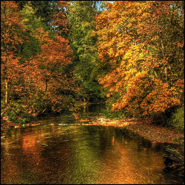 Goldstream River, just 17 kilometres from downtown Victoria, Goldstream Provincial Park lies amid the splendour of an old-growth temperate rain forest. There you can see a world class salmon-spawning stream with thousands of Chum Salmon returning between October and December. | by ecstaticist, via Flickr