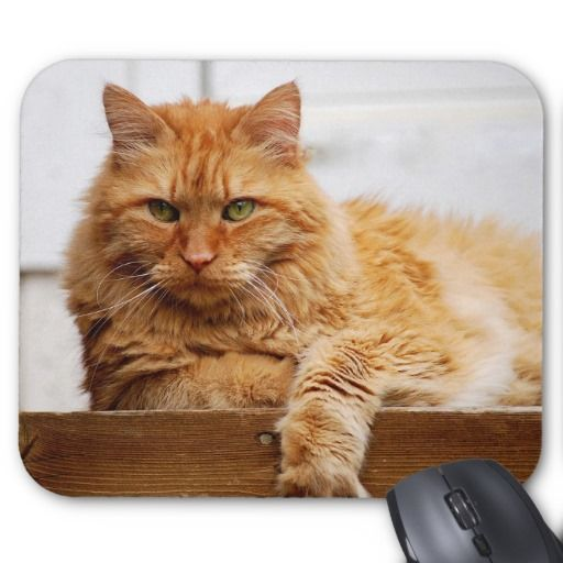 Norwegian Forest Cat, King of Cats Mousepad we are given they also recommend where is the best to buyHow to          	Norwegian Forest Cat, King of Cats Mousepad lowest price Fast Shipping and save your money Now!!...