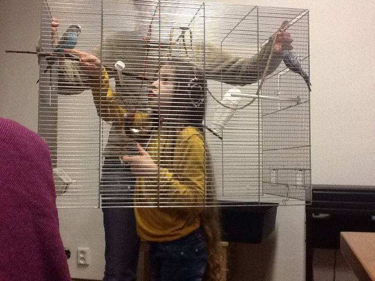 Our budgies