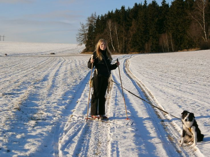 border collie Asheera Banataj Wind sunny skijöring