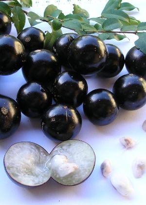 No jardim ou no vaso, aprenda a cultivar jabuticabeira em casa - 15/06/2016 - UOL Estilo de vida