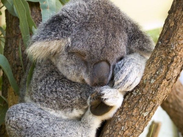 12 Unusual Things To Do In Sydney - http://www.vagabondfamily.org/blog/travel-tips/12-unusual-things-to-do-in-sydney/ #tourism #travel #Sydney