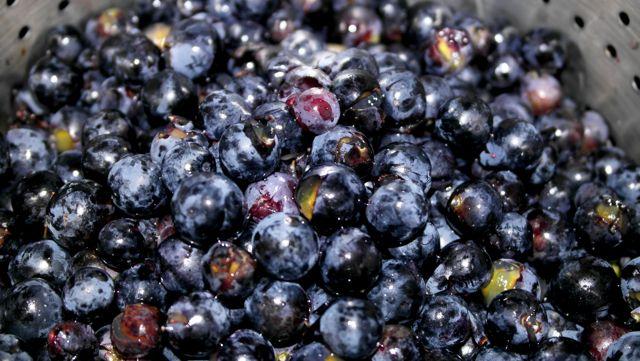 Trauben einkochen aus Gartentrauben - Traubensaft selber machen