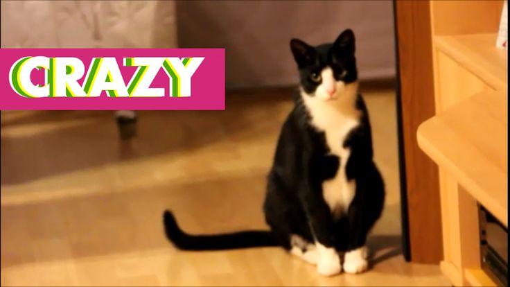 Tell me what you think of this? Suspicious Cat https://felixbcats.wordpress.com/2017/04/02/suspicious-cat/?utm_campaign=crowdfire&utm_content=crowdfire&utm_medium=social&utm_source=pinterest