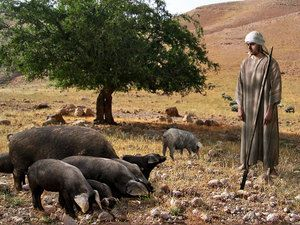 Prodigal Son Free Bible pictures of the parable of the Prodigal Son (or Two Sons).Luke 15:11-32