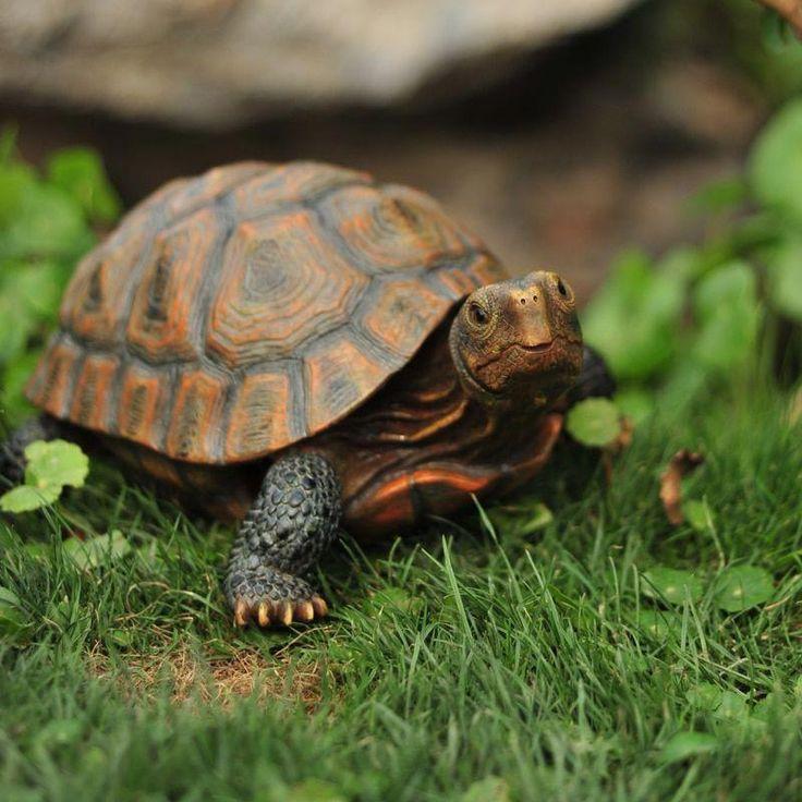 Turtle Garden Decor Figurine (4 sizes) Price: 14.80 & FREE ...