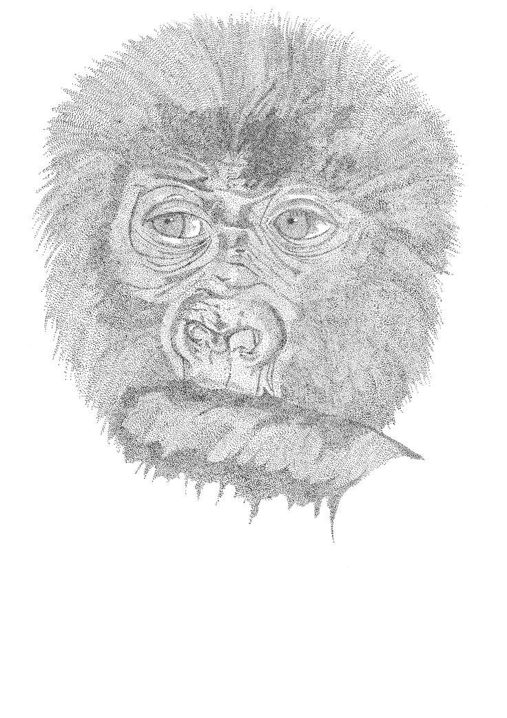 to the point - gorilla - Pen drawing - pen tekening - Pointillisme