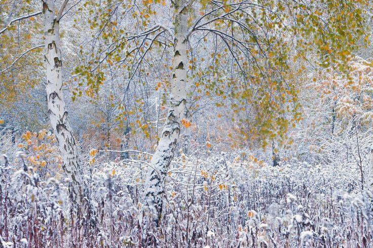 Niebanalne zdjęcia przyrody Bartosza Dubiela