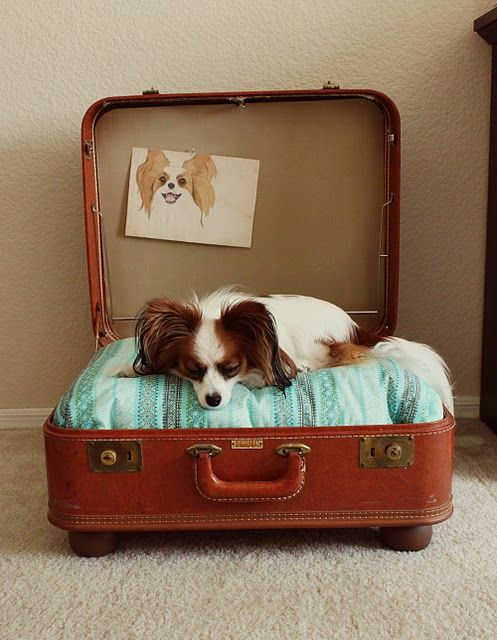Adorable diy dog bed made out of a vintage suitcase and cute pillow! Complete with doggy artwork.: Ideas, Vintage Suitcases, Old Suitca, Suitcases Dogs Beds, Pets, Pet Beds, Dog Beds, Diy, Animal
