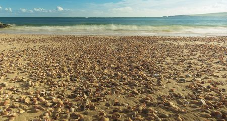 Beach Of Shells Photo by Richard Freeman — National Geographic Your Shot