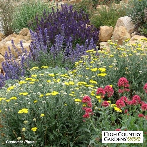 Jumbo Waterwise Pre Planned Garden Design Customer Photo Pre Planned Garden  From High Country