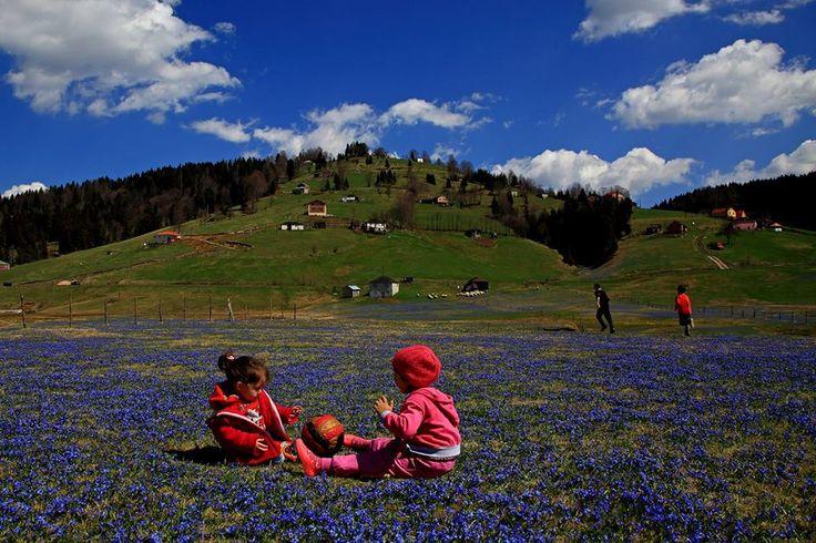 Trabzon yayla mavi yıldız çiçekleri ve çocuklar mis gibi yayla havası