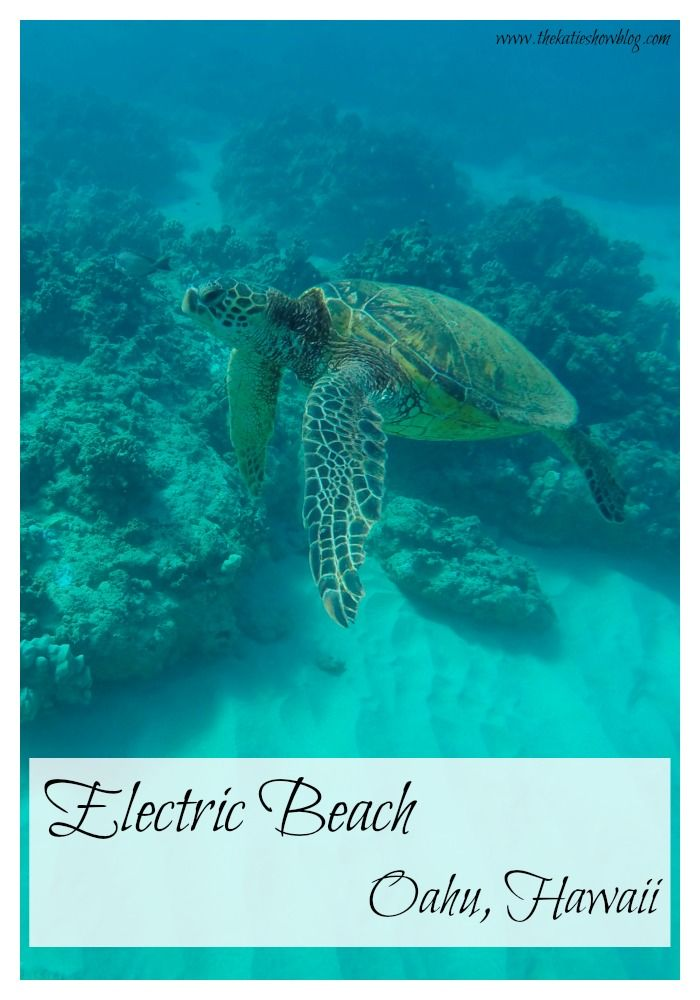 A guide to snorkeling at Electric Beach in Oahu Hawaii - the best snorkeling spot on the island!