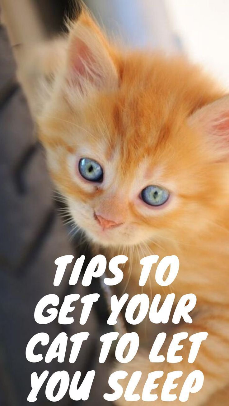 Tips To Get Your Cat To Let You Sleep Cats Funny Cats Cat Facts