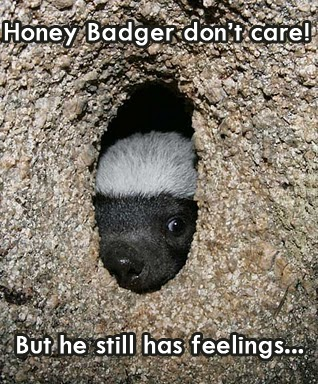 Poor little honey badger.