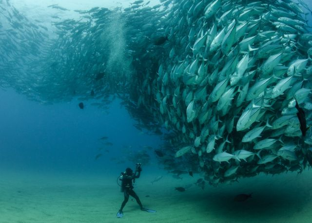 Wave of Fish  Photo by Octavio Aburto | Photo Location: Cabo Pulmo, Baja California Sur, Mexico >>> What an unbelievable shot!