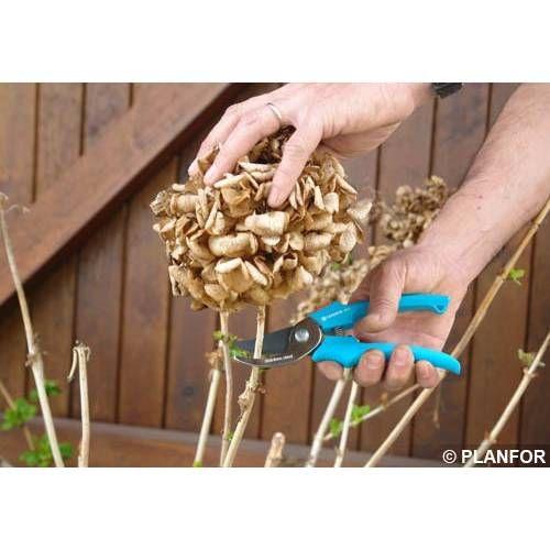 25 melhores ideias sobre hort nsias de poda no pinterest - Hortensias cuidados poda ...