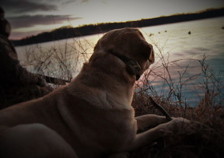 Hoss and Zack watching the sunrise, looking on, and waiting for the birds to show...