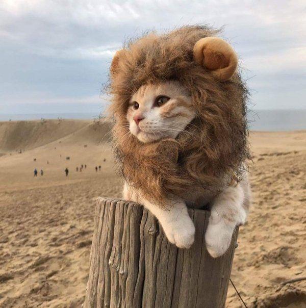 I am kitty, hear me roar.