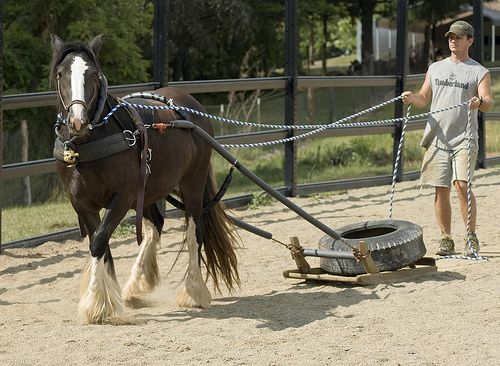 homemade+horse+harness | Discuss Home-made simple harness for pulling things? at the Tack ...