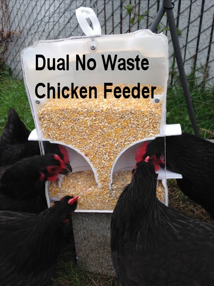 No Waster Feeder Hold Two Different Feed at same time ...