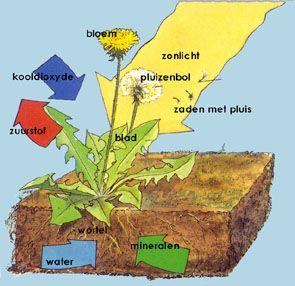 hoe groeit een plant