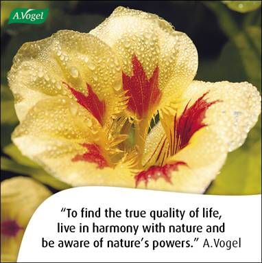 To find the true quality of life, live in harmony with nature and be aware of nature's powers. A.Vogel