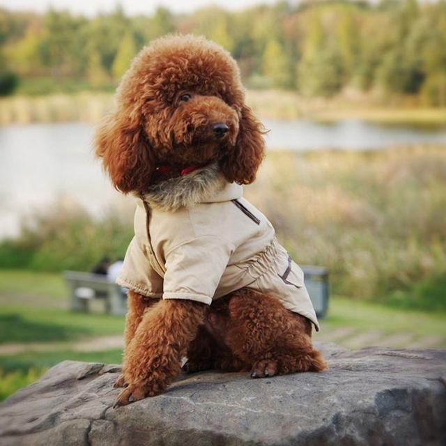 I have a feeling you'll like this one  Khaki dog rain jacket with hood  http://dogtrunk.com/products/free-shipping-chicdog-fashion-new-dogs-clothes-hooded-tuxedo-dog-winter-coat-jackets-cheap-warm-clothing-for-pets-puppy-cat?utm_campaign=crowdfire&utm_content=crowdfire&utm_medium=social&utm_source=pinterest