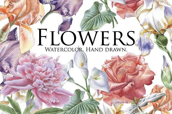 Flowers. Watercolor. Hand drawn. by rednex on @creativemarket