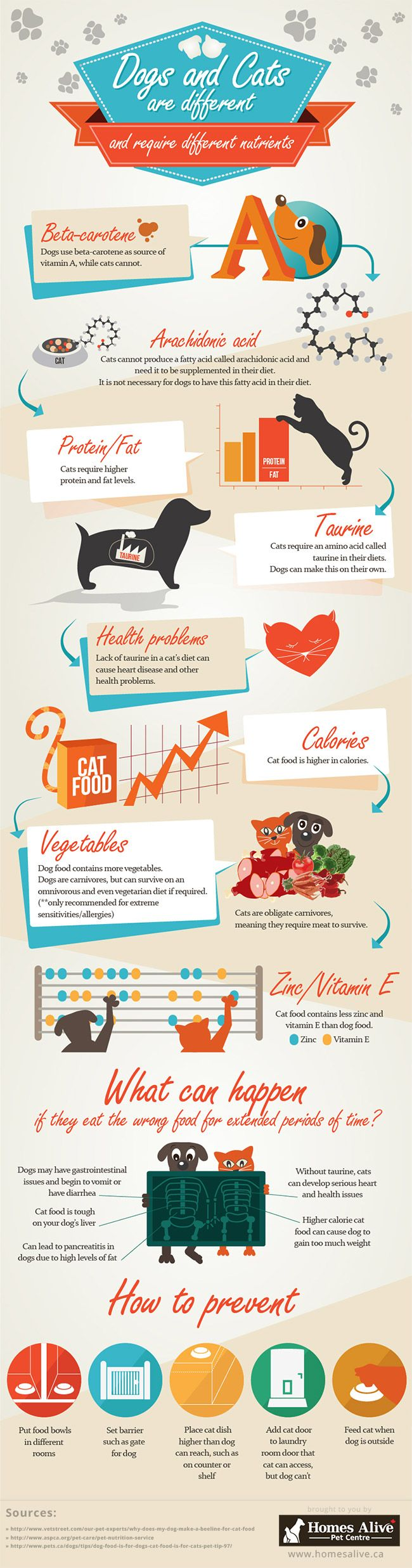 Differences Between Dog  Cat Foods