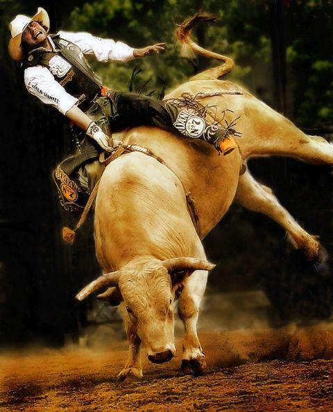 Texas Scream MachineRodeo Life, Bull Rider, Hard Riding, Scream Machine Cowboy, Texas Scream, Cowboy Cowgirls, Bucks Bull, Pbr Bull, Rough Riding