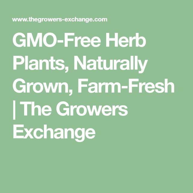 GMO-Free Herb Plants, Naturally Grown, Farm-Fresh   The Growers Exchange