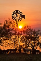 Horses gathering around a windmill at Sunset, pure Texas! TammyDReynolds.com