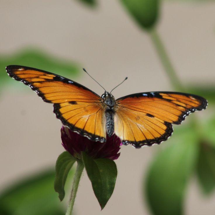 Butterfly Zanzibar trip 2016