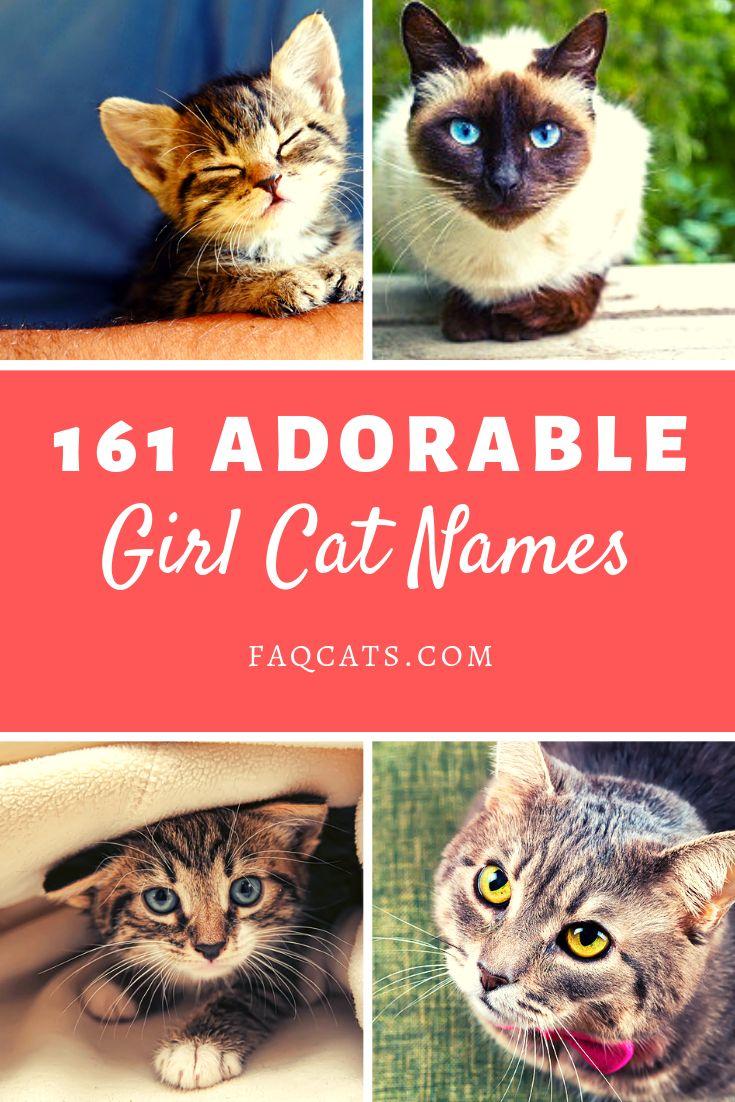 161 Female Tabby Cat Names You Will Love! in 2020 Girl