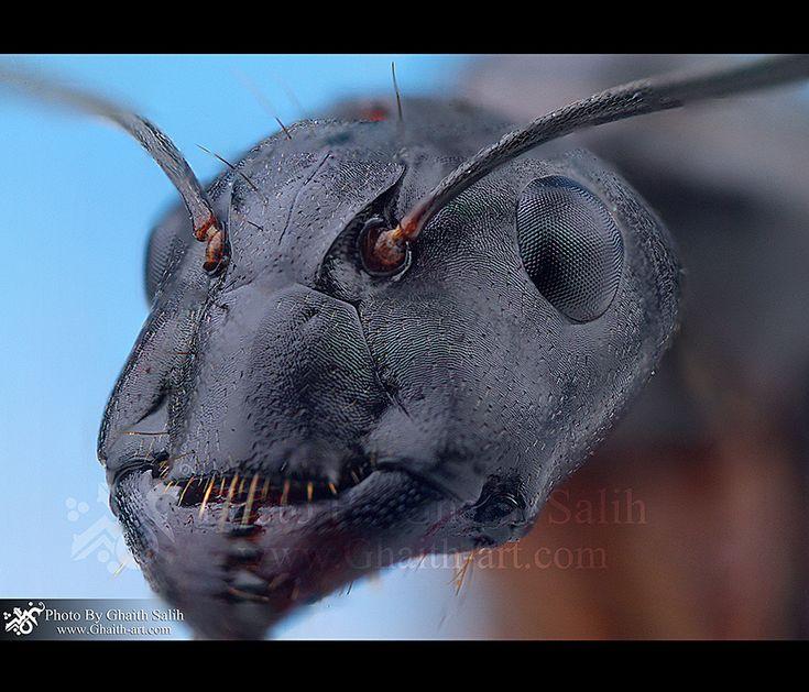 Head of an ant by Ghaith Salih