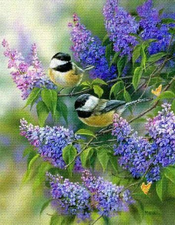 Анимация Две синички сидят на ветках распустившейся сирени, одна из них поворачивает голову, обе машут крылышками. В правом нижнем углу картинки порхает желтая бабочка