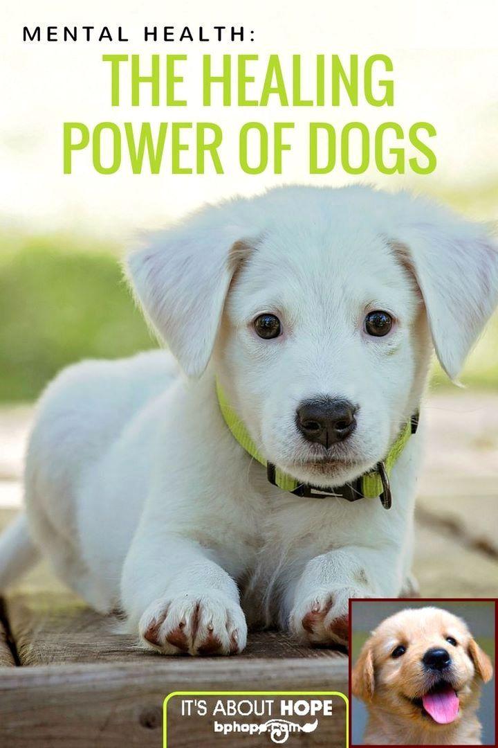 Is House Training A Puppy Hard And Clicker Dog Training Petsmart Dog Behavior Pinterest Dog Behavior Dogs And Dog Training