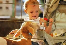 Toddlers and petting zoos! Rent petting zoo animals - we come to you! in California OC area - Petting zoo animal rental - Irvine, Riverside, LA, Orange County, Santa Ana, and surrounding areas! Newport Beach, Anaheim - children's zoo