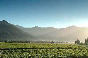 TOUR DEL VINO - VALLE DE CASABLANCA Nuestra visita se efectúa en el valle de Casablanca, reconocido por las condiciones climáticas y las bondades de sus suelos para el cultivo de cepas como Chardonnay, Sauvignon Blanc, entre otras..
