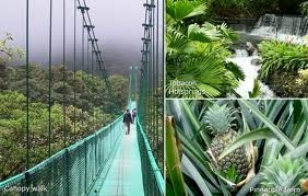 My MOST favorite place I have seen yet!!! <3 Monte Verde Cloud Forest Reserve, Costa Rica...