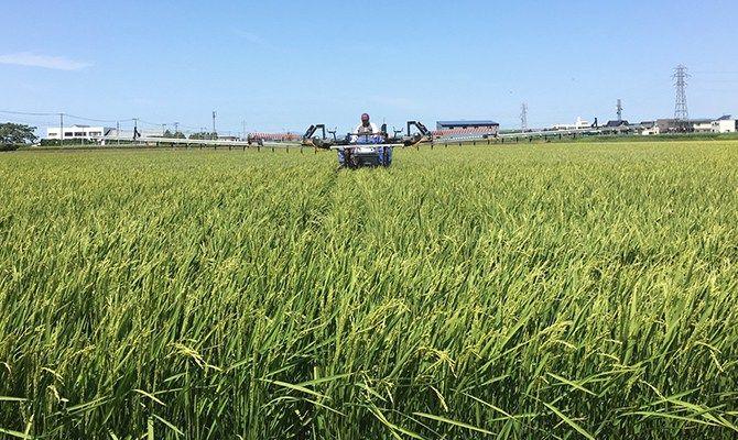 自ら探し求めた肥料は安心安全   土壌を痩せさせないために、毎年8月頃になるとラジコンヘリを使い10日おきに3回防除によって、いもち病予防の為の殺菌剤と着色米を作ってしまうカメムシなどを殺す殺虫剤を撒いています。 稲も人間と一緒で、水分や糖分が足りないと脱水症状になってしまうので、カリウムや糖質、プロリンという保湿アミノ酸なども一緒に撒いていきます。