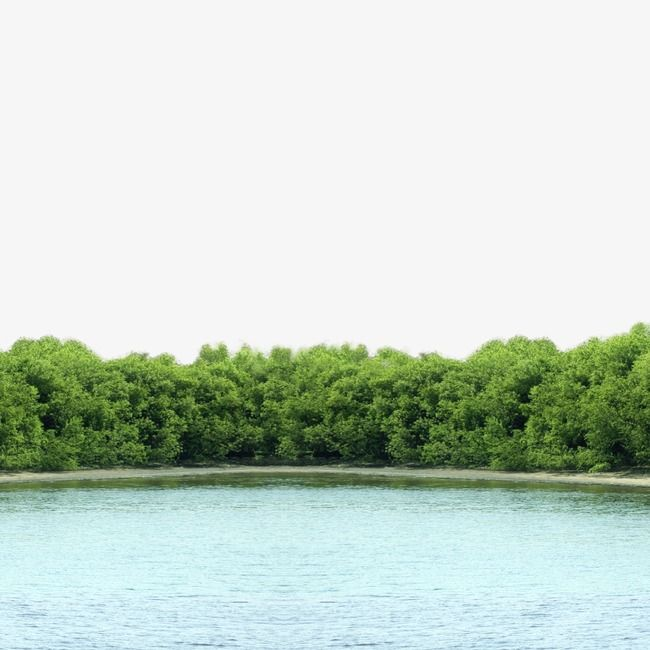 منظر البحيرة Lake Forest Forest Lake Scenery