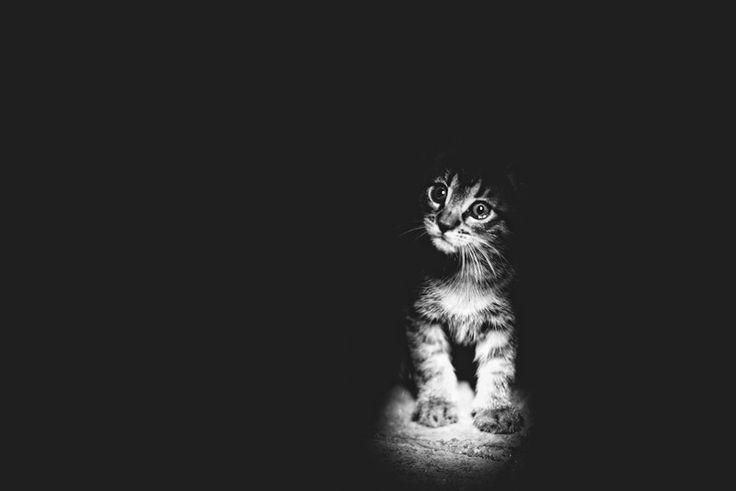 Czarno białe zdjęcie kota- na płótnie. w Fotografia Monika Małek na DaWanda.com