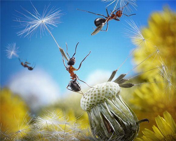 ideia do fotógrafo russo Andrey Pavlov