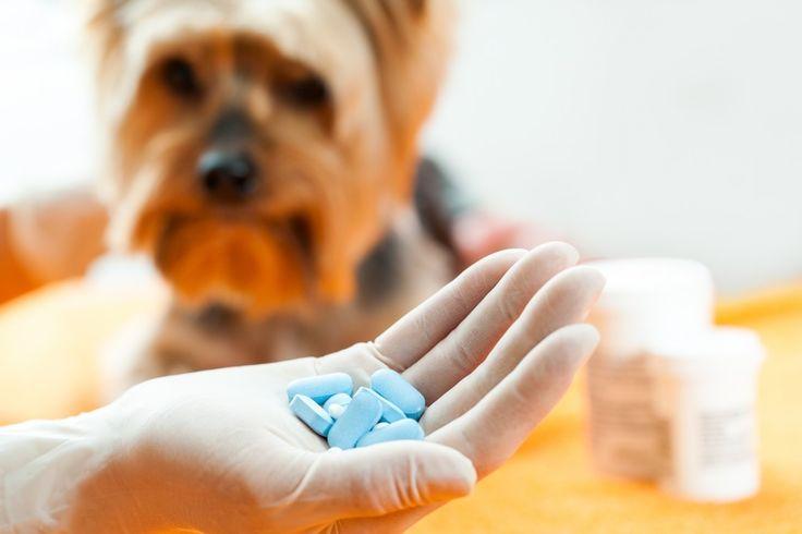 عندما تمرض القطة أو الكلب الخاص بك يدفعك الفزع إلى فعل أي شئ لعلاجهم بشكل سريع. لذلك نقدم لك أدوية بشرية ملائمة للإستخدام البيطري مع الحيوانات الأليفة