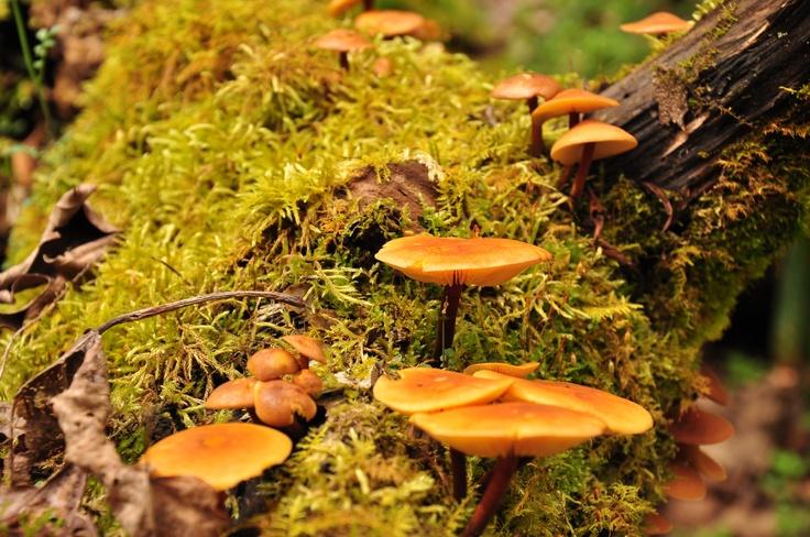 Fungus: Beautiful Fungus