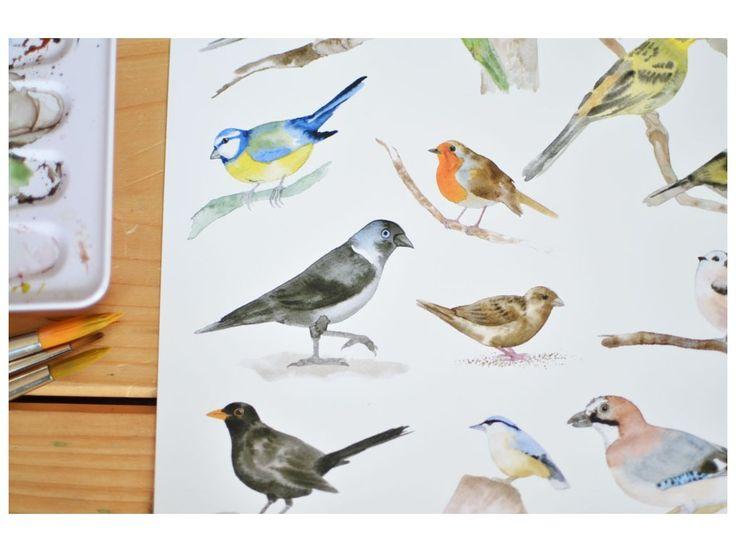 Ptáčci z našich krmítek. Umělecký tisk, velikost A4 by myyna