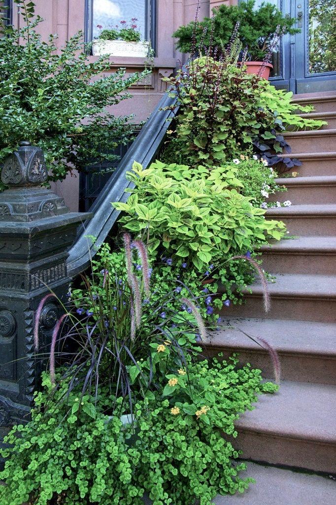 Required Reading: Sidewalk Gardens of New York: Gardenista
